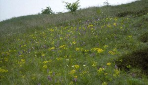 s-Naturschutzgebiet-Porphyrlandschaft-Brachwitz